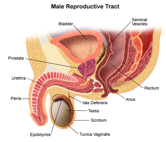 Transurethral Resection of Prostate (TURP)
